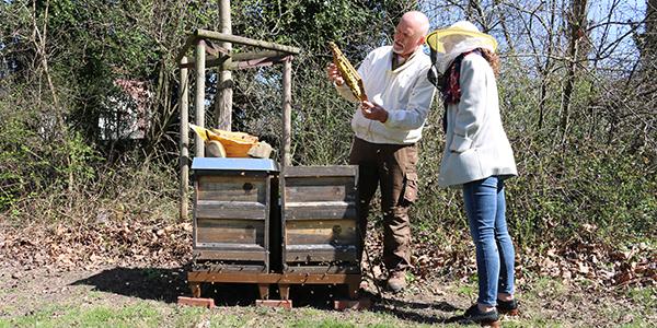 Zwei Honigbienenvölker leben am ALDI SÜD Standort in Mülheim.