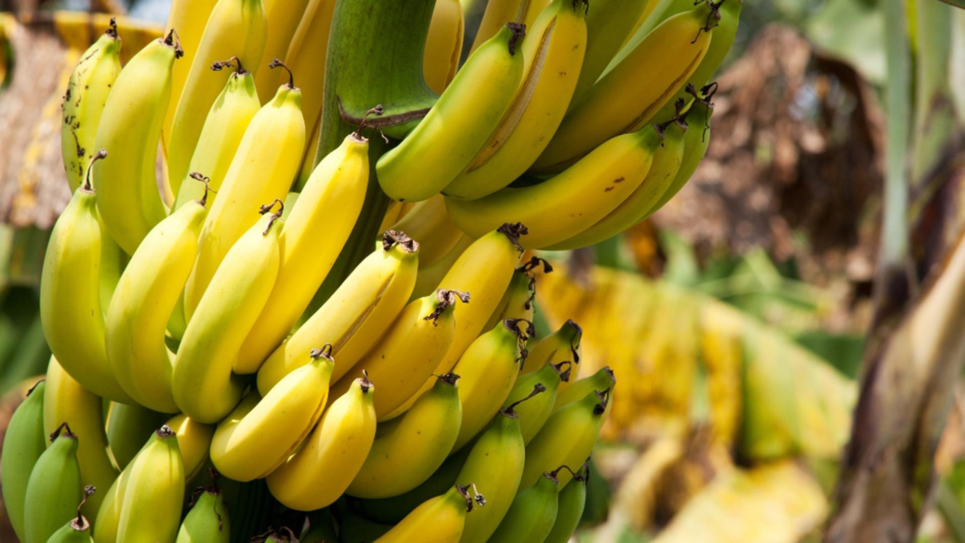 Prächtig Wo unsere Bananen, Mangos und Ananas ihren Ursprung haben - ALDI @HB_82