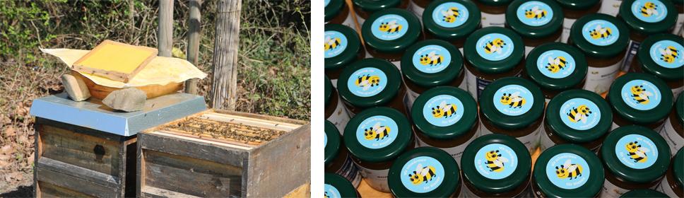 ALDI SÜD hat einen eigenen Bienenstock.