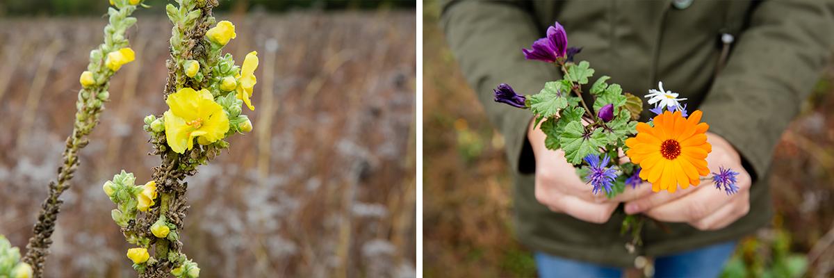 Die Wildbienen finden auf den Blühflächen auch im Winter Unterschlupf.