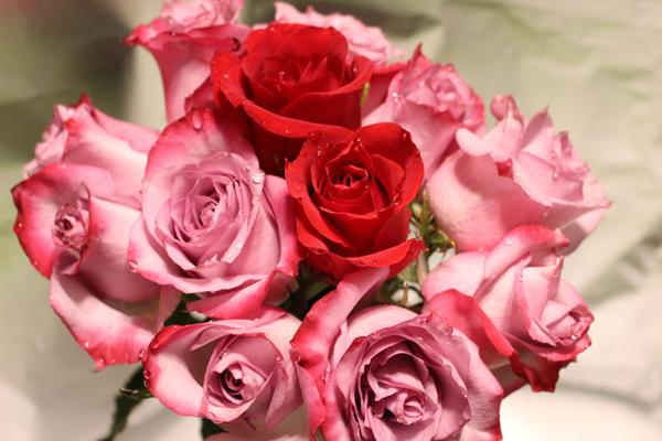 Besondere Blumen zu besonderen Anlässen: Rosen zu Valentinstag, Muttertag oder Ostern
