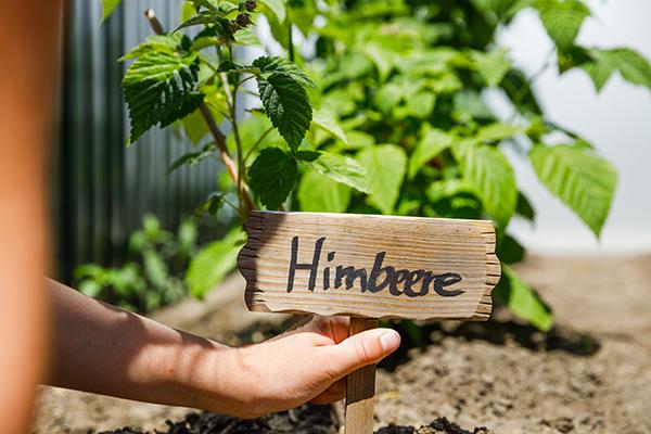 Kinder pflanzen Gemüse