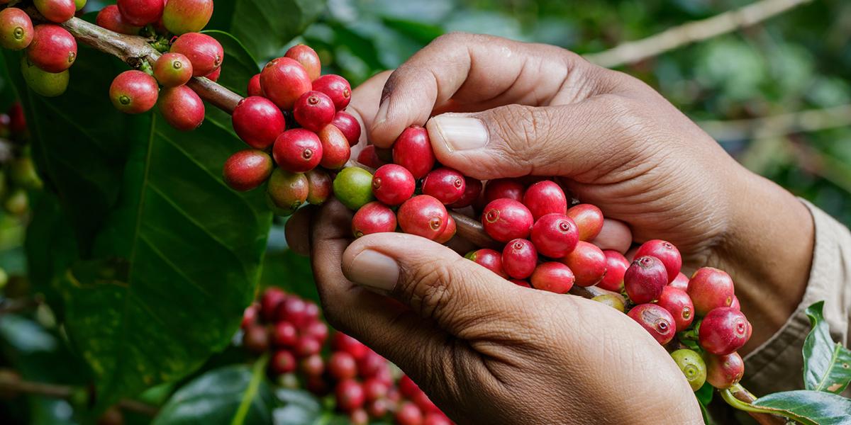 Herkunft ALDI Kaffee
